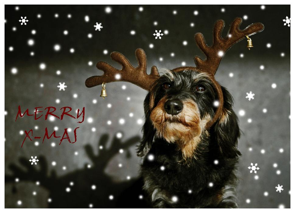 Amélie Weihnachtskarte