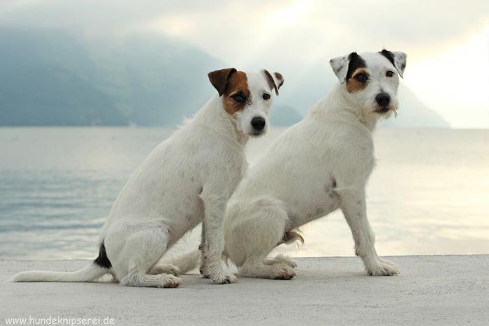 Julie und Sir Pepper am See